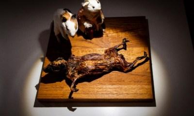 Museo de la Comida Asquerosa