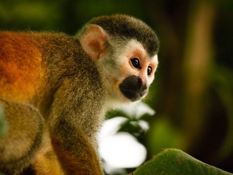 """""""acoso sexual"""" a un mono"""