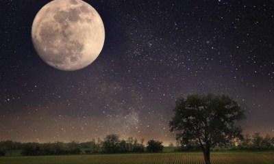 Plata que germinó en la Luna muere