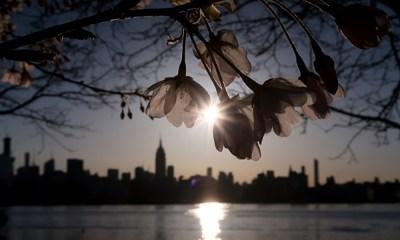 recibir la primavera en el mundo