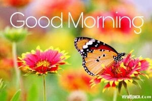 good morning images of nature