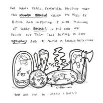 science, curious, curiosity, fun, funny, humor, bacteria, komodo dragon, venomous