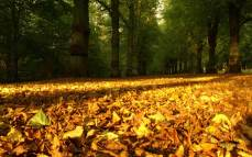Autumn Wallpapers (11)