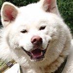 Profilbild von Mela_Nie