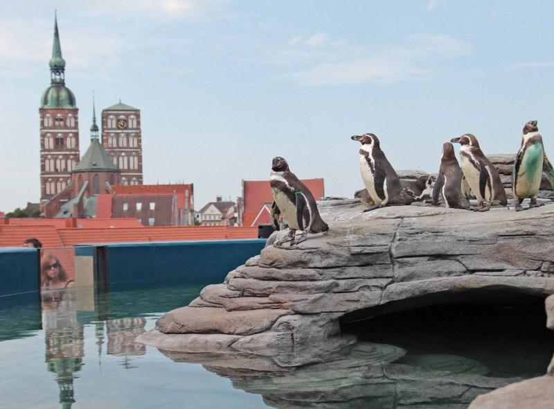 Pinguine auf der Dachterrasse