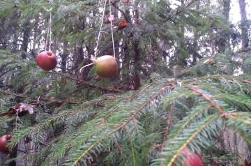 Lüttenweihnachten: Heiligabend mitten im Wald
