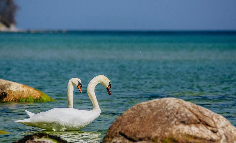 Geschützte Natur an Wittows Nordufer