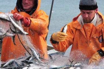 Willkommen zu den Rügener Fisch(er)tagen