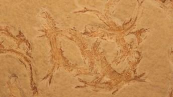 Fossil des Jahres 2016 im Kreidemuseum Gummanz auf Rügen
