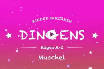 """""""Dingens – Rügen von A bis Z"""": M wie Muschel"""