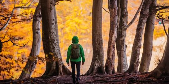 Wandern im Nationalpark Jasmund