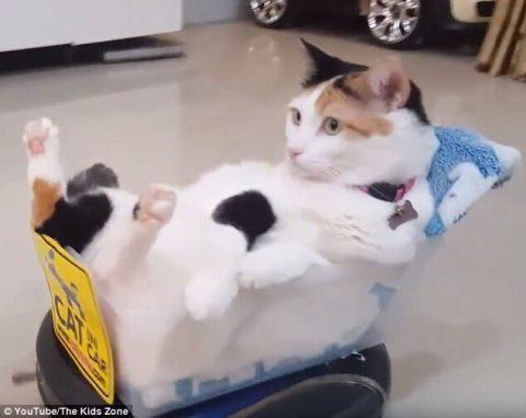Cat riding Roomba
