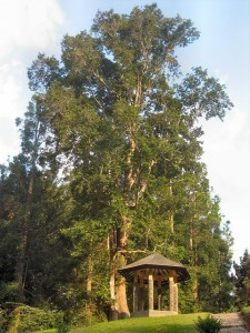 Gazebo kebun Raya Cibodas