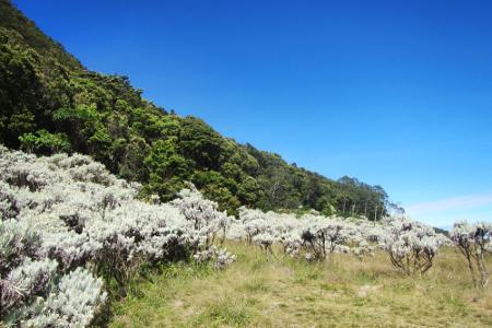Pemandangan Edelweis di Alun-Alun