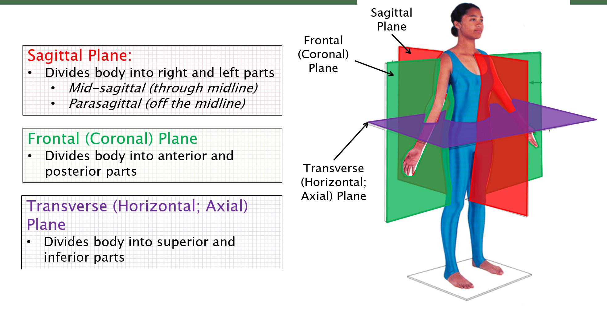 Anatomical Terminology Anatomy 622 Coursebook