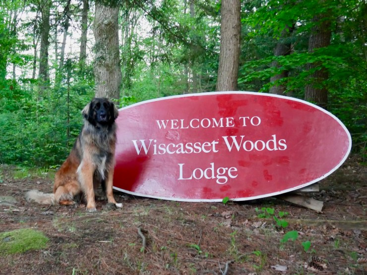 Large dog next to Wiscasset Woods Lodge sign and woodlands