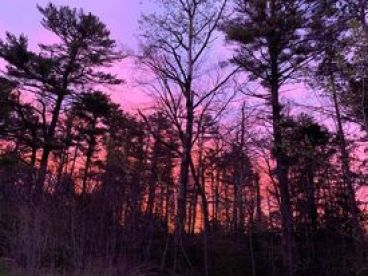 our woods at sunrise