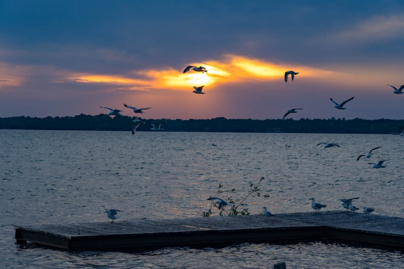 Sunset with seagulls on the shore of Washington Island