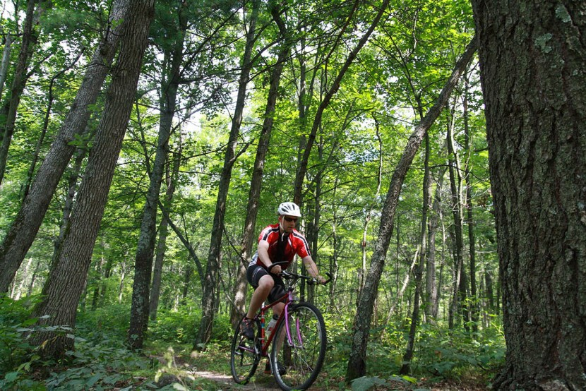 Man riding mountain bike in woods low angle photo