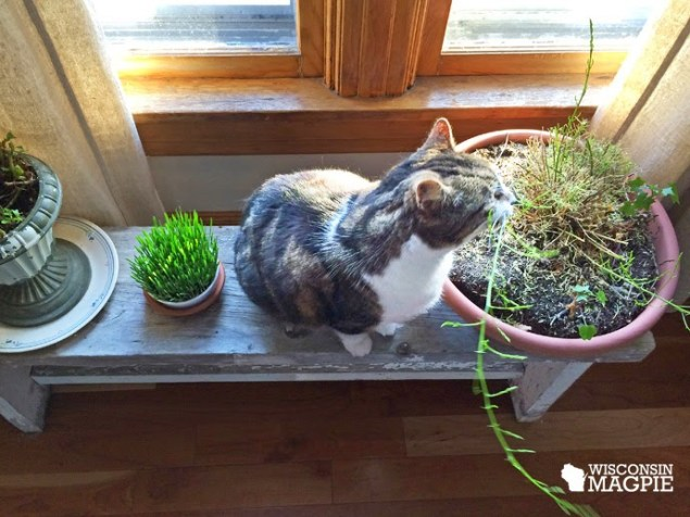 cat with asparagus fern
