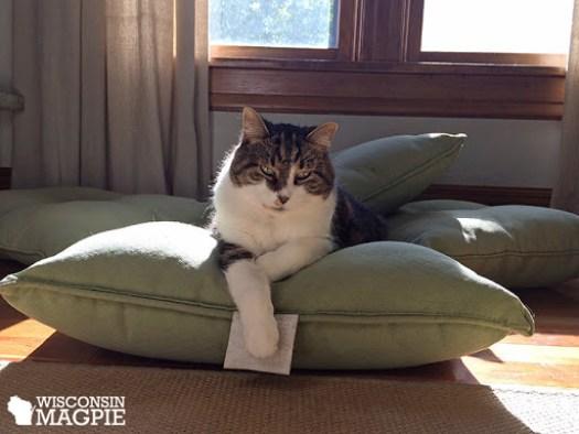 Calvin laying on patio cushions