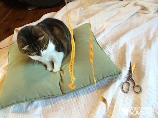 Calvin sitting on pillow