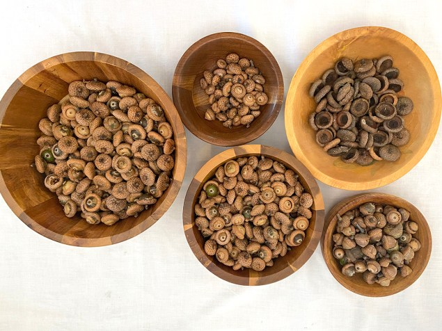 bowls full of acorns and acorn caps