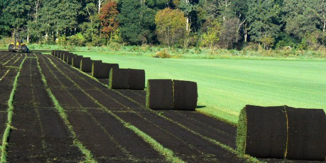 Sod production fields benefit from WTA research