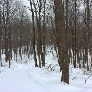 Jack Lake Trail