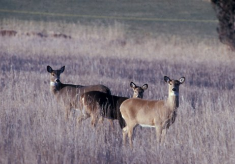 Wisconsin has spent nearly $41 billion in state and federal money since 2002 to fight chronic wasting disease.