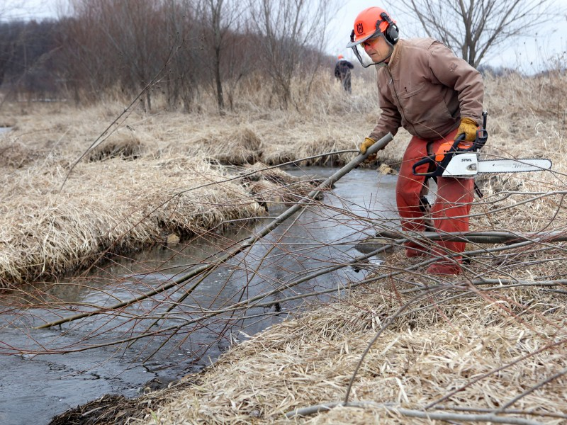 Box elders are removed from the banks of the Pleasant Valley Branch during a volunteer work day coordinated by Southern Wisconsin Trout Unlimited in March. The roots of the native tree are weak, allowing the stream bank to more easily fall into the water and disrupt fish habitat.
