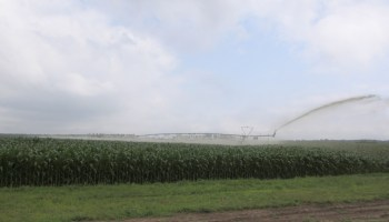 A center pivot manure irrigation system is used to spread manure on a Wisconsin corn field.