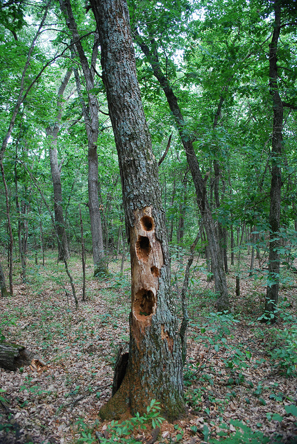 Holey Tree