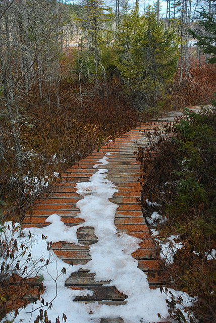 Boardwalk to Shelp Lake