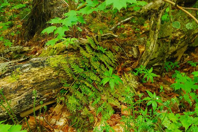 Forest Millieux