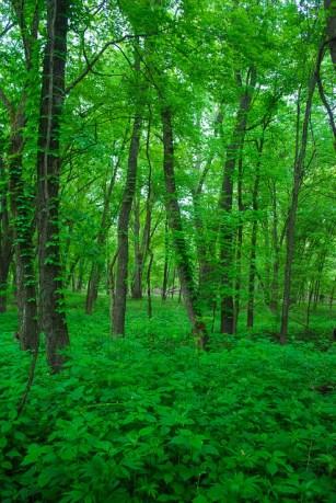 Floodplain Forest