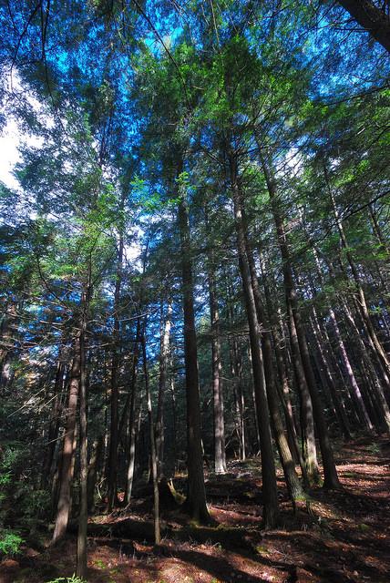 ForestForest