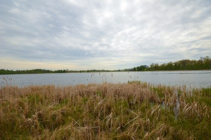 Bass Lake Fen