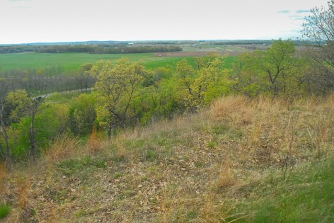View from the Bluff