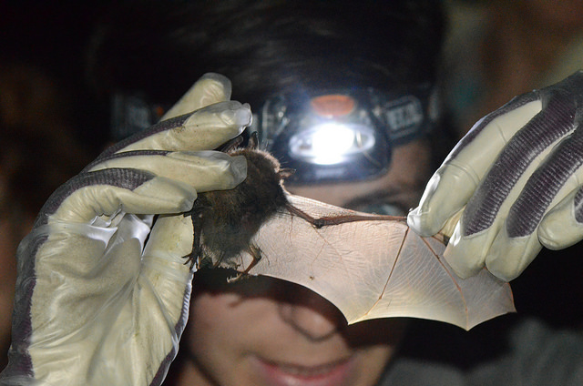 Bat Monitoring