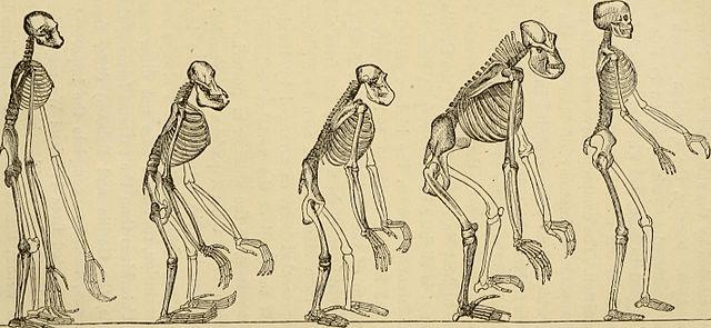 evolution in the Industrial Revolution