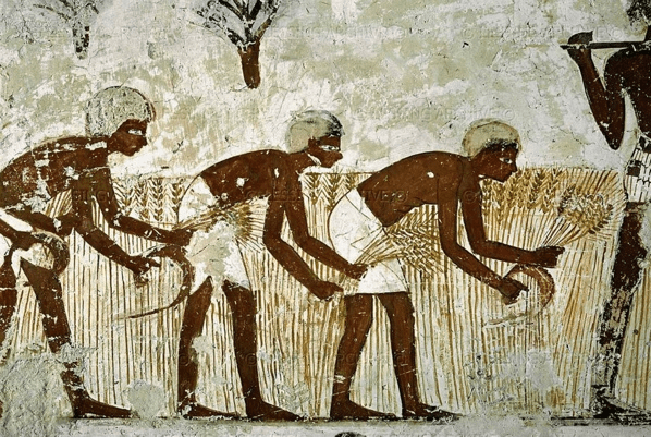 digital history of Ancient Egypt | agriculture