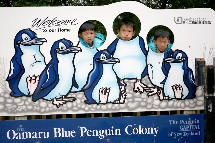 紐西蘭南島推薦行程 奧瑪魯看世界最小藍企鵝Oamaru Blue Penguin Colony