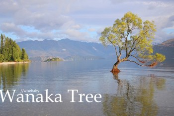 紐西蘭自助 南島必拍景點Wanaka Tree瓦納卡之樹