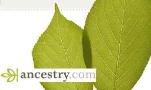 ancestry leaves