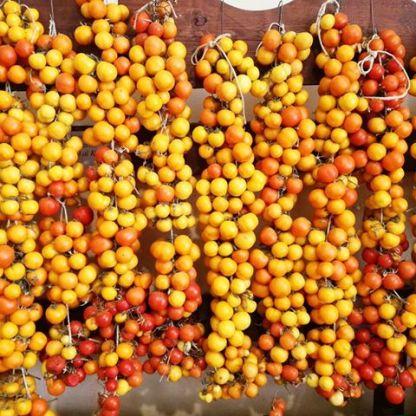 pomodori invernali da appendere semi