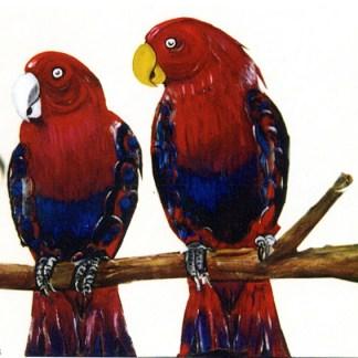 quadro pappagalli rossi