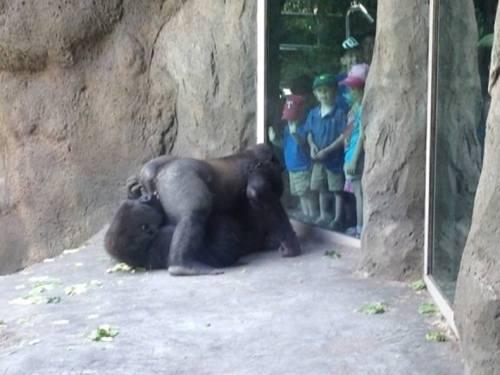 Aquella visita al zoo fue realmente instructiva.