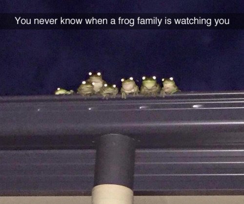 Nunca sabes cuando una familia de ranas puede estar vigilándote.