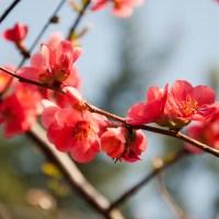 I colori della primavera: rosso